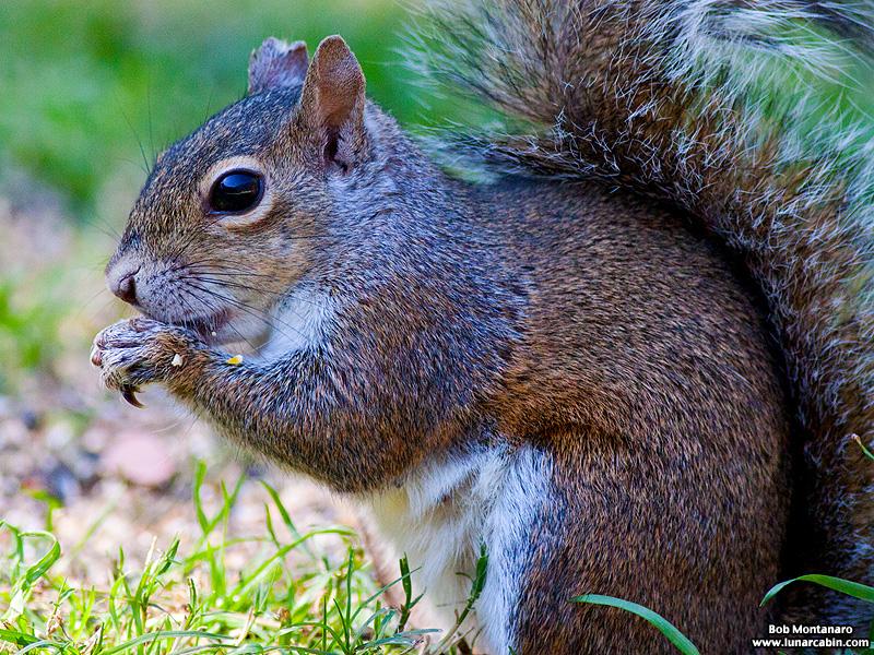 backyard_squirrel_160312_3