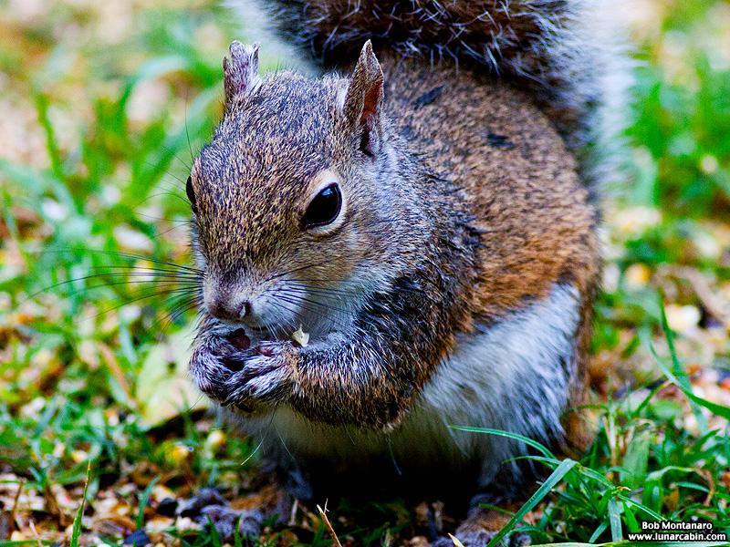 backyard_squirrel_160312_4