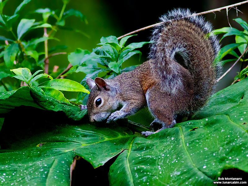backyard_squirrel_160312_5