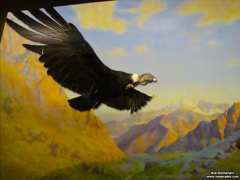 ny_stuffed_birds_101129_2