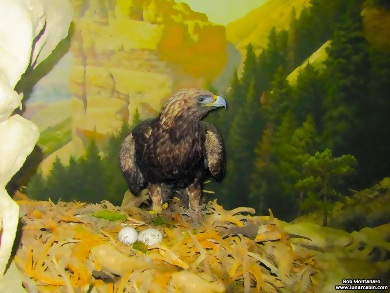 ny_stuffed_birds_101129_3