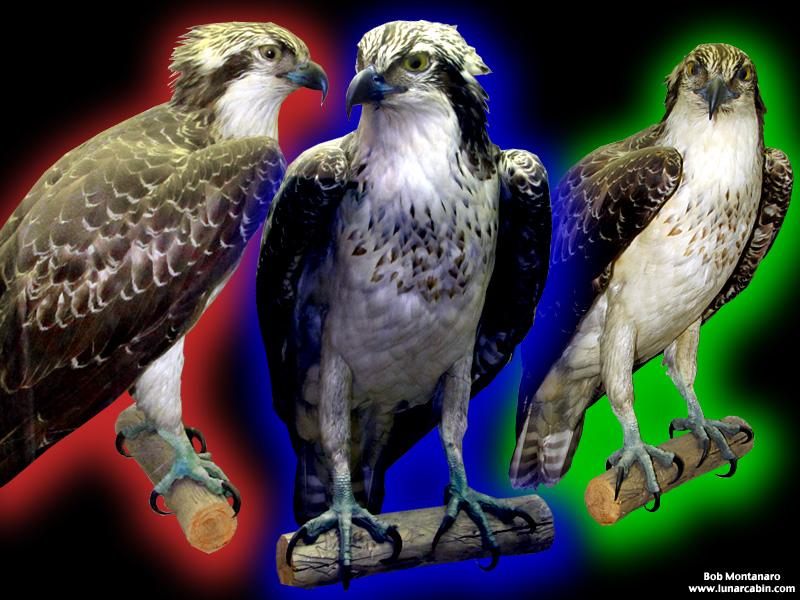 ny_stuffed_birds_101129_4