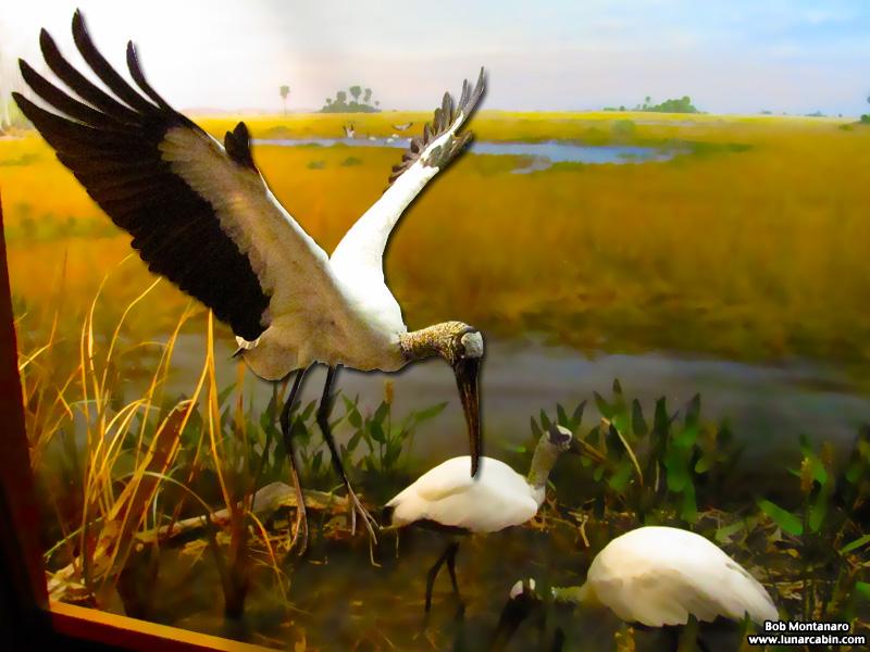 ny_stuffed_birds_101129_6