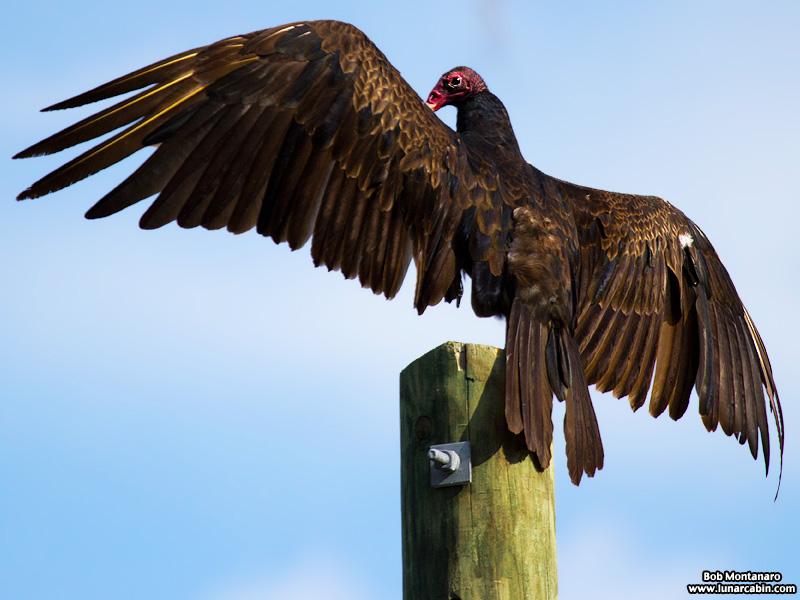 vultures_160425_1