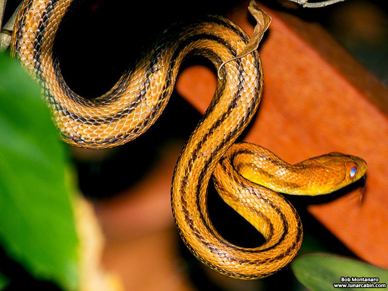 rat_snake_160501_4